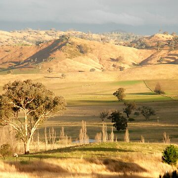 On The Road to Gundagai, NSW, Australia. by kaysharp
