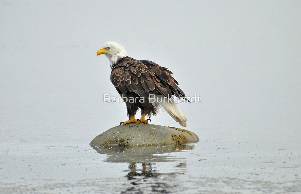 On Watch - American Bald Eagle by Barbara Burkhardt