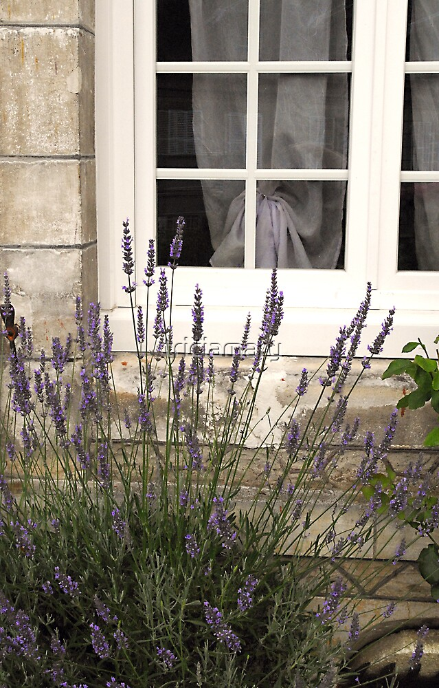 Lavender and lace by triciamary