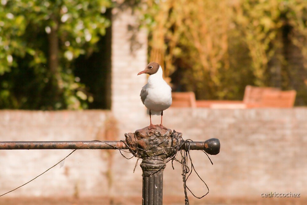 Bird by cedriccochez