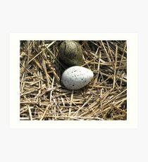 Sea birds' nest Art Print