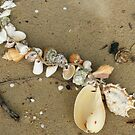 String of Shells by Caroline Angell