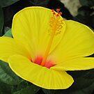so so yellow by ANNABEL   S. ALENTON