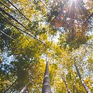 Morning sunlight through the bamboo by James-OLT
