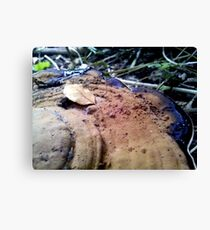 Dirty Cap Canvas Print
