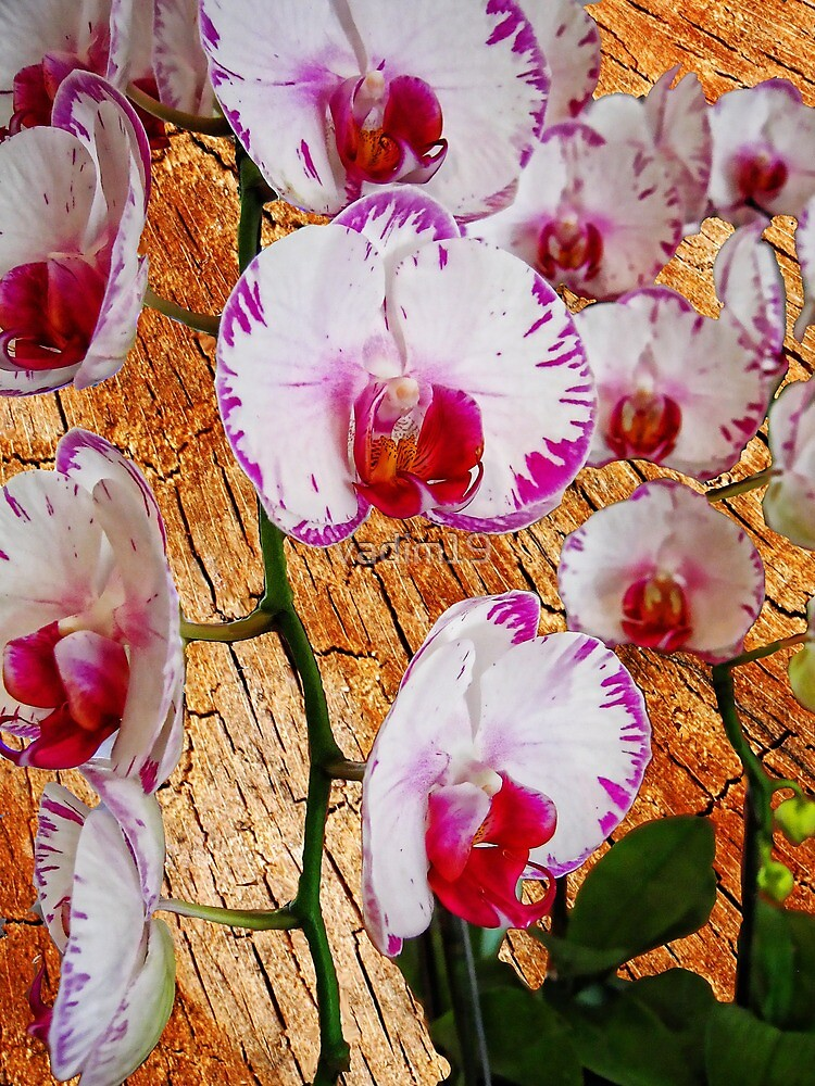Orchids by vadim19