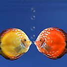 Shy fish by southmind