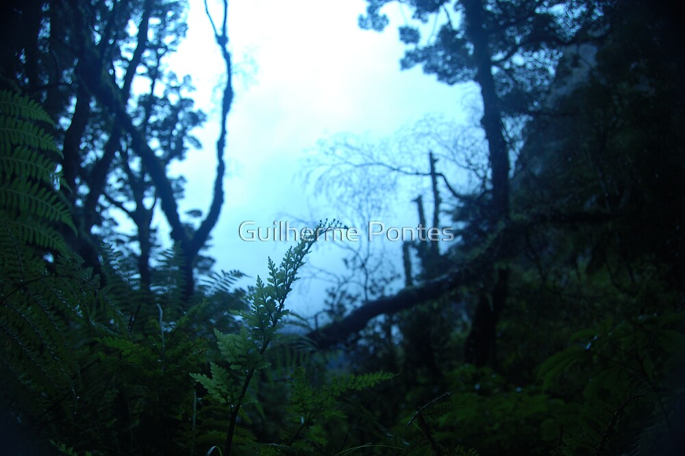 New Zealand Forest at Dawn by Guilherme Pontes