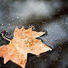 Leaf by Nicole  Hastings