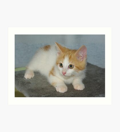 Rescue Kitten #2 Art Print