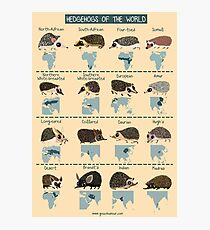 Hedgehogs of the World Photographic Print