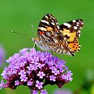 French Flutter by Kklove