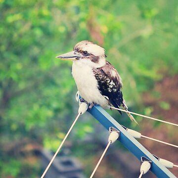 Backyard Surveillance - Kookaburra sitting on an old clothesline  by Bellamaree