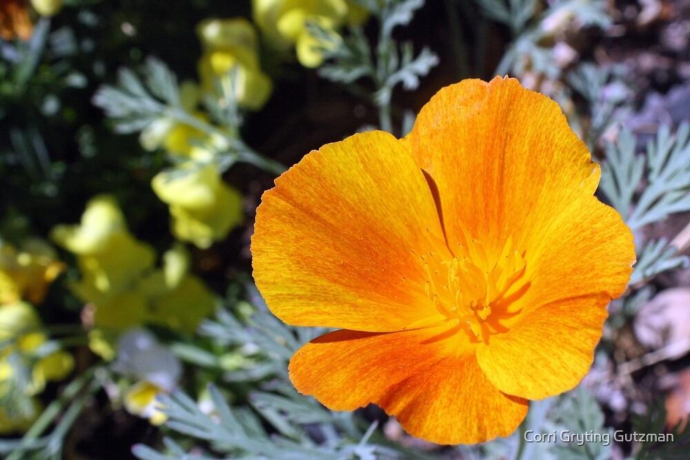 California Poppy Power by Corri Gryting Gutzman