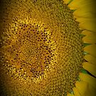 Up Close and Personal Giant Sunflower by ArtbyCherylS