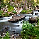 Bridge Over Mitchell Creek by Gary Lengyel