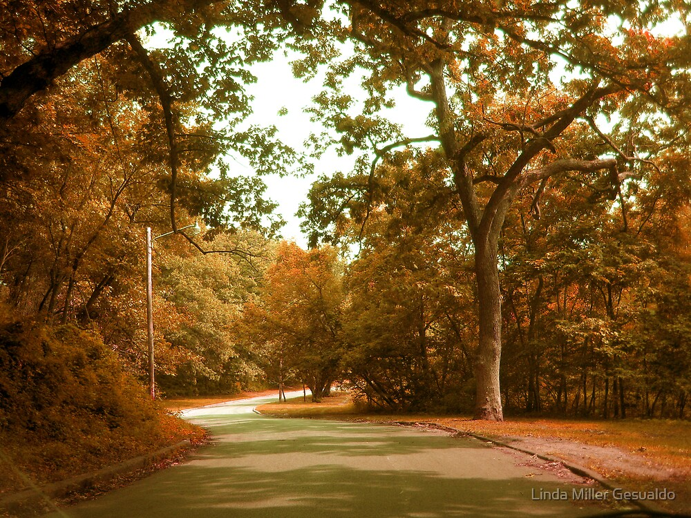 Autumn Drive Through The Park by Linda Miller Gesualdo