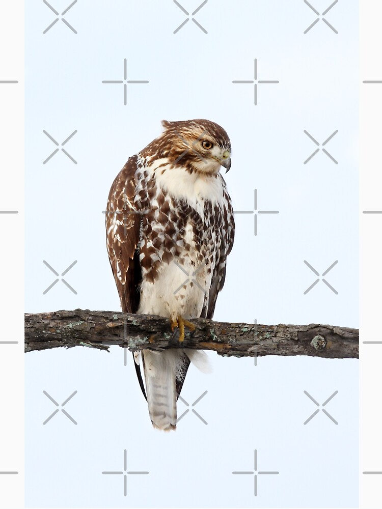 Red-tailed Hawk - Perched by darby8