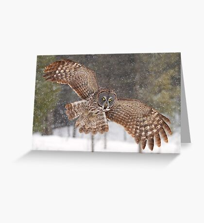 Awesome! - Great Grey Owl Greeting Card