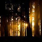 Light Beyond by Belinda Osgood