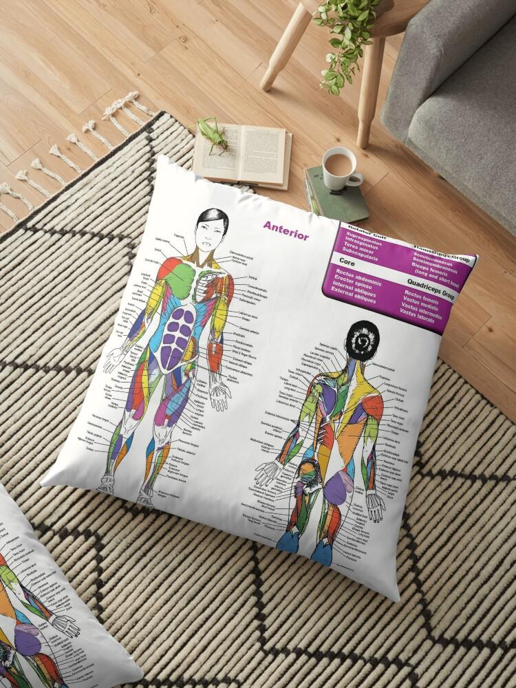 female muscle diagram - anatomy chart