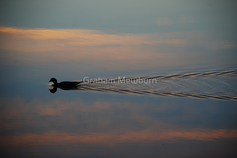 Swimming in the Sky! by Graham Mewburn