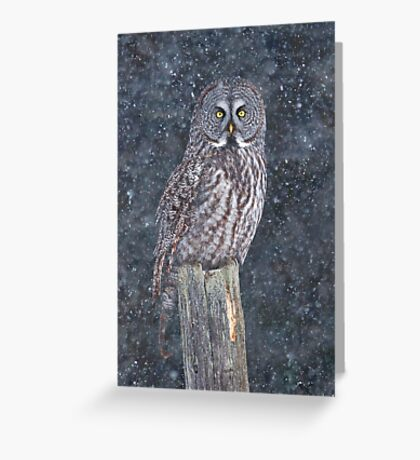 Great Grey Owl in Snow Greeting Card
