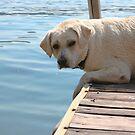Daisy On The Dock by Karen Kaleta