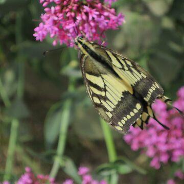 Butterfly by BOBBYBABE