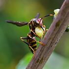 Red Paper Wasp by Otto Danby II