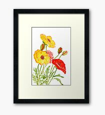 red and yellow poppies  Framed Print