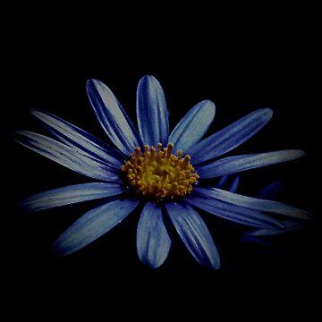 Blue Daisy On Black by LyndaAnneArt