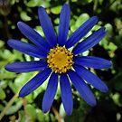 Bright Blue Daisy by Lynda Anne Williams