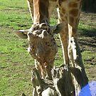 Giraffes 026 by pasta26mc