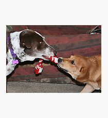 Dogs at play 2 Photographic Print