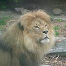 Lions 011 by pasta26mc