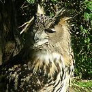 Owl bords 021 by pasta26mc