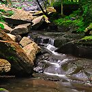 Filmore Glen State Park III by PJS15204