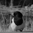 Butcher Bird by Nathan  Johnson