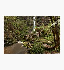 Erskine Falls • Victoria Photographic Print