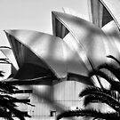 Opera House textures B/W by scottsphotos