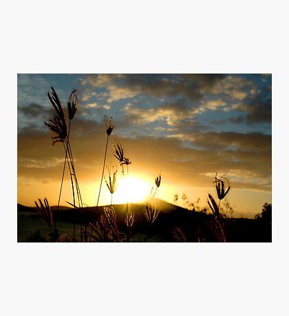 Delicate Grass Photographic Print