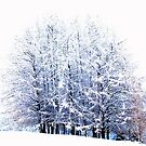 Snowy Group of Trees by Imi Koetz