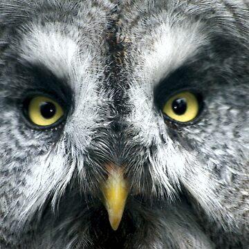 Owl Eyes by JohnDalkin