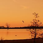 Silence is Golden - Lake Fyans by imaginethis