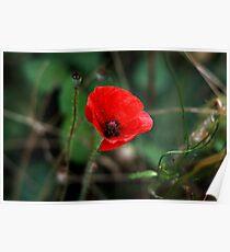 Poppy of Rememberance Poster