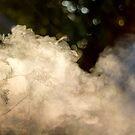 Autumn Afternoon Pine Smoke Drifting by heidiannemorris