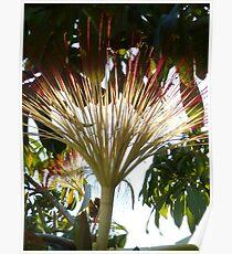 tropical beauty - belleza tropical Poster