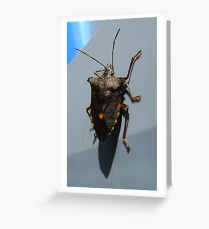 Forest Bug, Pentatoma rufipes Greeting Card