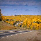 Road into Fall by Yukondick